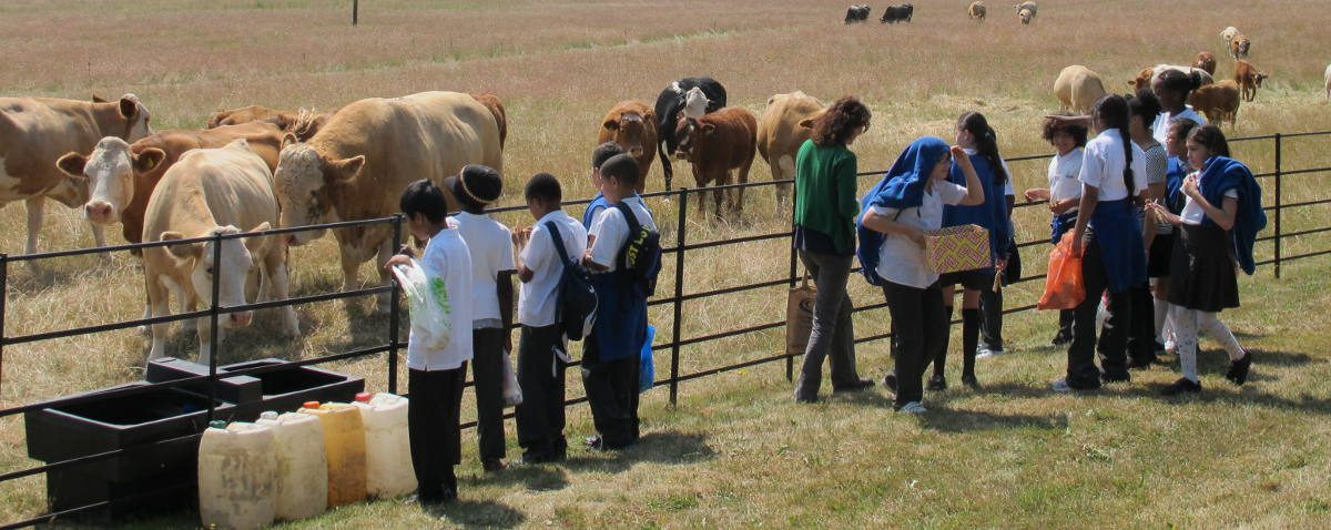 Discovery Day children with farm animals in rural Hertfordshire